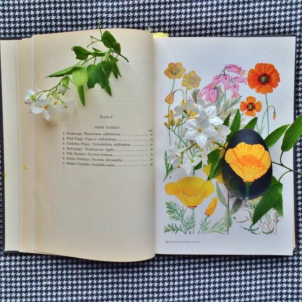 typhoontessie.com CA wildflower Easter eggs